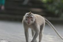 长尾巴小猴子图片大全