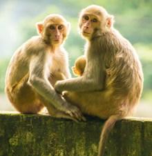 两只猴子图片