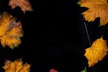 枫叶背景素材精美图片