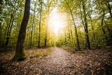 逆光樹林唯美風景高清圖片