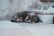 可爱萌猫睡觉图片大全