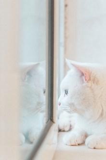 可愛白色貓咪萌寵高清圖