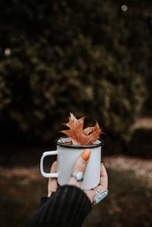 非主流手捧一杯枫叶精美图片