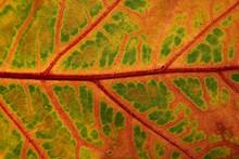 树叶纹理背景素材图片下载