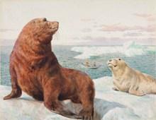 海獅油畫圖片素材