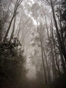 迷霧樹林風景圖片下載