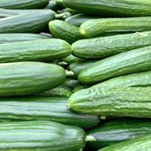 绿色黄瓜图片