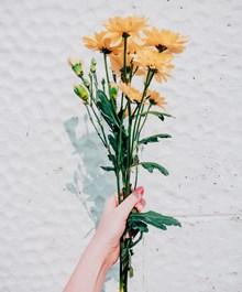 一束黄菊花高清图片