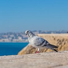 观赏鸽子的图片大全