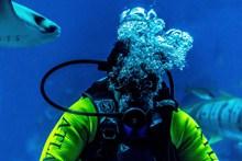 深海潜水水下运动精美图片