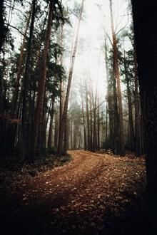 树林风光非主流风景高清图