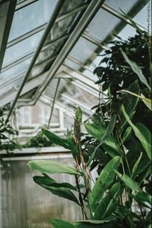 大盆种植绿叶植物 大盆种植绿色植物大全图片大全