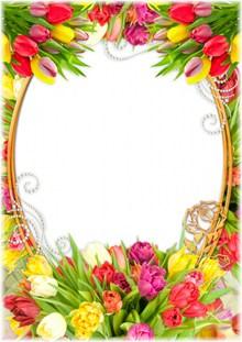 郁金香花边框图片下载