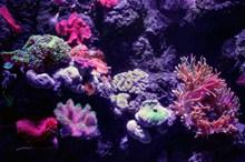 高清海底珊瑚图片大全