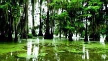 绿色湖泊水面浮萍高清图