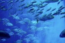海洋鱼群图片大全