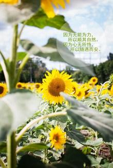 阳光正能量文字 阳光正能量文字大全图片大全