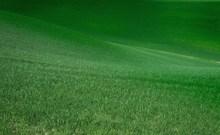 绿色护眼草坪图片