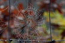 蜘蛛网雨后蜘蛛网图片大全