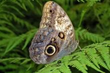 美丽斑点蝴蝶高清图