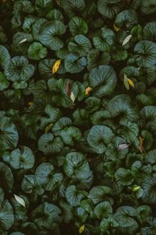 黑绿色植物竖屏图片素材