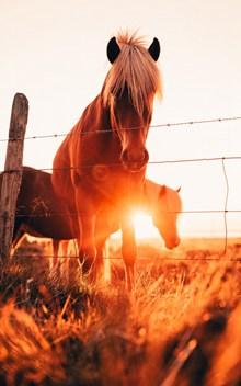 逆光唯美棕色马匹图片大全