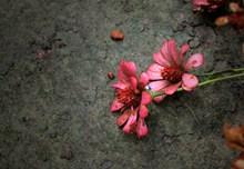 非主流鲜花唯美高清图