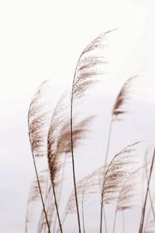 非主流芦苇风景高清图片
