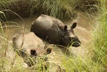 水中犀牛 水中犀牛大全图片下载
