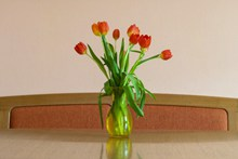 水培橙色郁金香花朵图片大全
