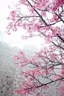 唯美粉色樱花高清图片下载
