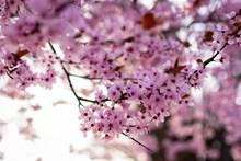 浪漫粉色鲜花花朵 浪漫粉色鲜花花朵大全图片