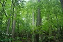 大自然绿色树林风景精美图片