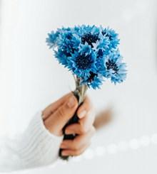 手拿蓝色花束图片大全
