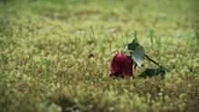 遗忘的玫瑰花高清图