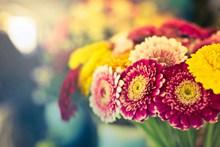 非主流治愈系意境花卉图片下载