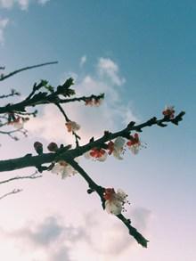 桃花随拍精美图片