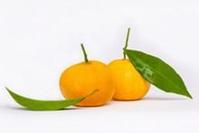 新鲜黄色橘子精美图片