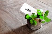 清新盆栽植物图片下载