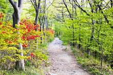 绿色小清新树林图片下载