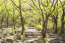 春天小清新树林精美图片