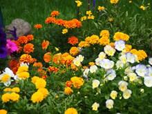 春季鲜花开发高清图片
