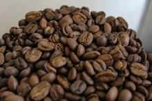 饱满咖啡豆素材图片大全