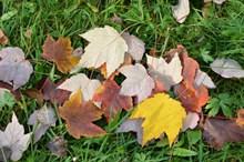 秋天多彩落叶图片素材