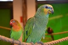 宠物鸟鹦鹉图片下载