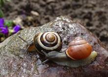 两只蜗牛爬行精美图片