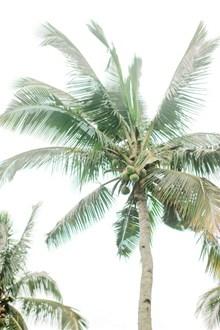 椰子树低角度摄影图片下载