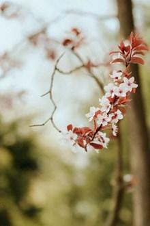 春天花朵唯美意境 春天花朵唯美意境大全高清图