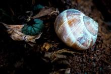 坚硬蜗牛壳高清图片
