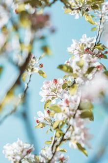 春天白色鲜花花朵 春天白色鲜花花朵大全图片素材